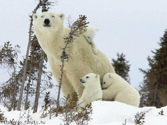 Comme c'est beau l'Amour ! même chez les animaux dans Amour (119) 5rj5esqv